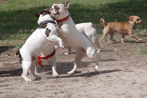 frenchieMeetup_2_2013-7288