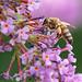 Garden Bee Shots-1.jpg