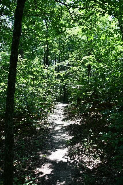 Knob Top Trail, Bernheim Forest