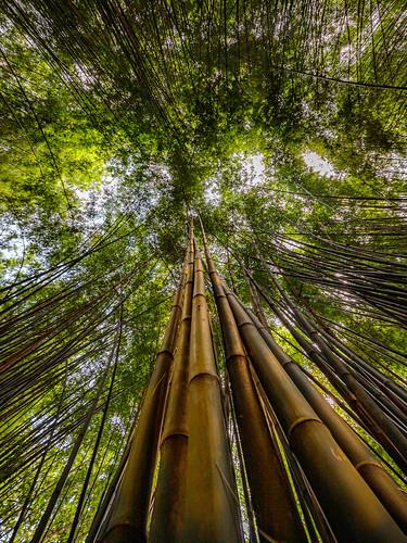 project365 2019 bamboo wat chulabhorn wanaram nakhon nayok