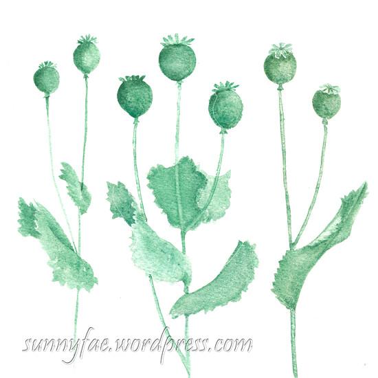 poppy seed-heads