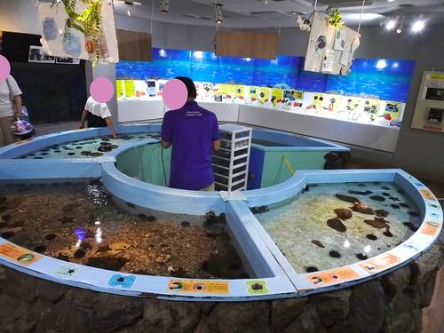 淡島マリンパークの水族館のタッチコーナー