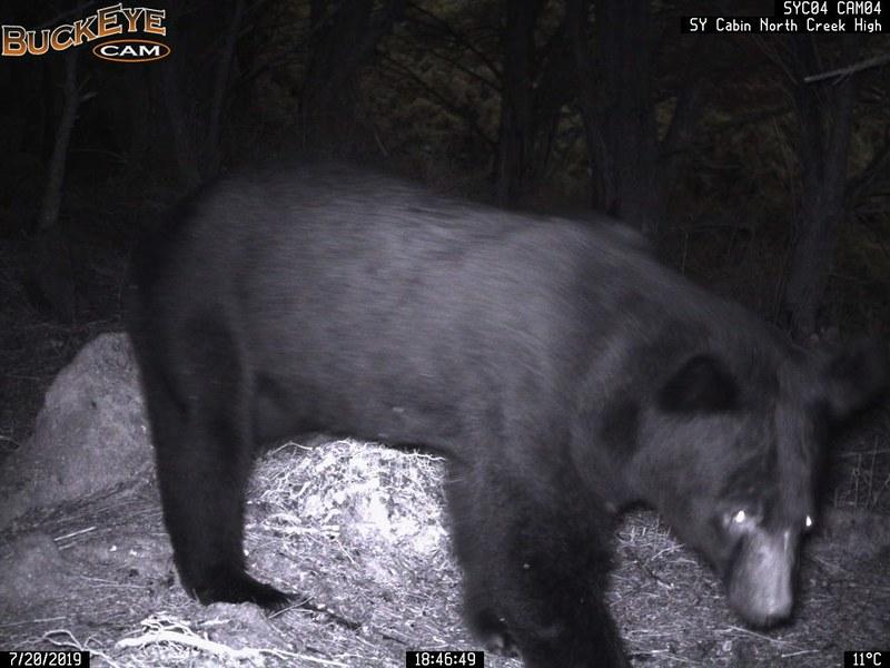 台灣黑熊靠近第一次預警系統_64279