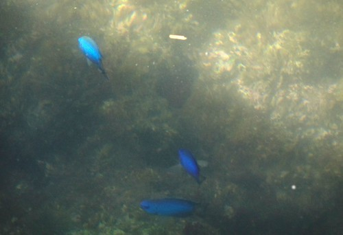 淡島マリンパークのきれいな魚