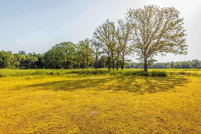 Yellowed Dutch nature reserve