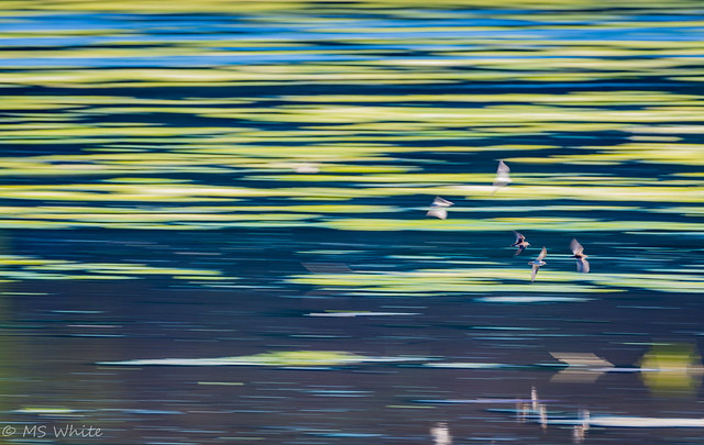 Panning is for the birds