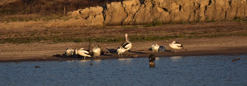 Birds at the dam