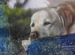 It is raining again!
