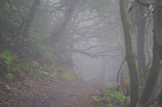 Anaga, misty laurel forest, Tenerife