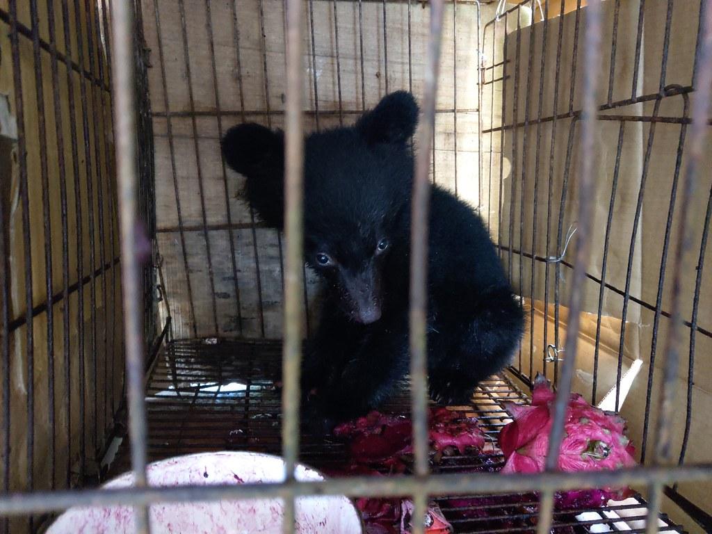 台東廣原小熊。圖片提供:台東林管處。