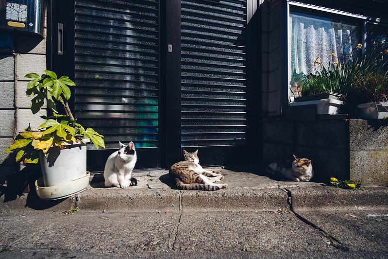 函館|Hakodate
