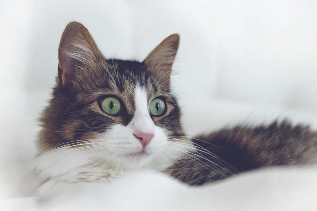 Juju the cat