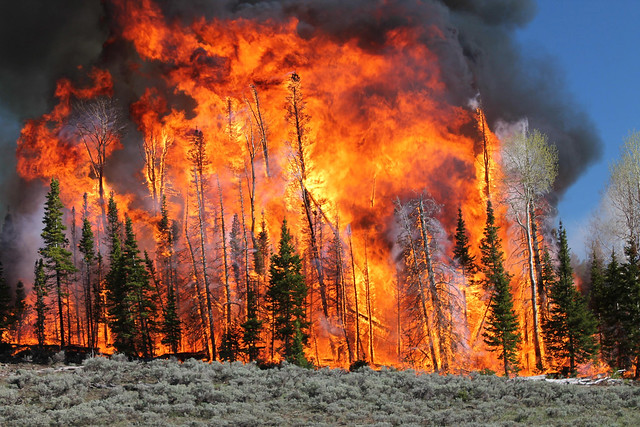 A high-intensity prescribed fire on the Fishlake National Forest in Utah