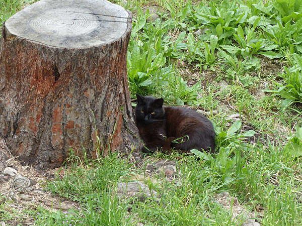 chat noir et tronc