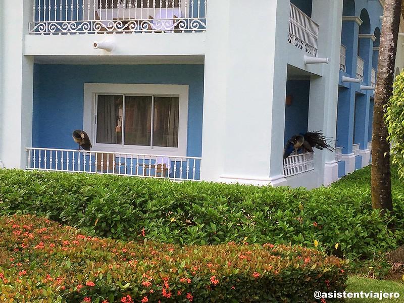 iberostar-hacienda-dominicus-exteriores_48394935677_o