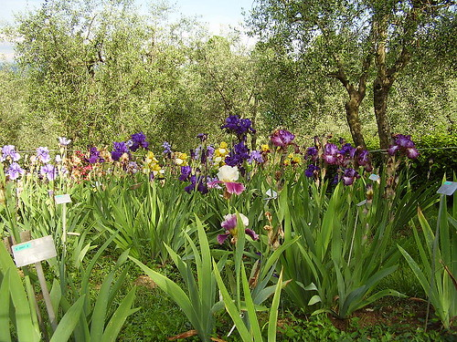 Iris Garden. From The Best Free Attractions To Visit In Florence