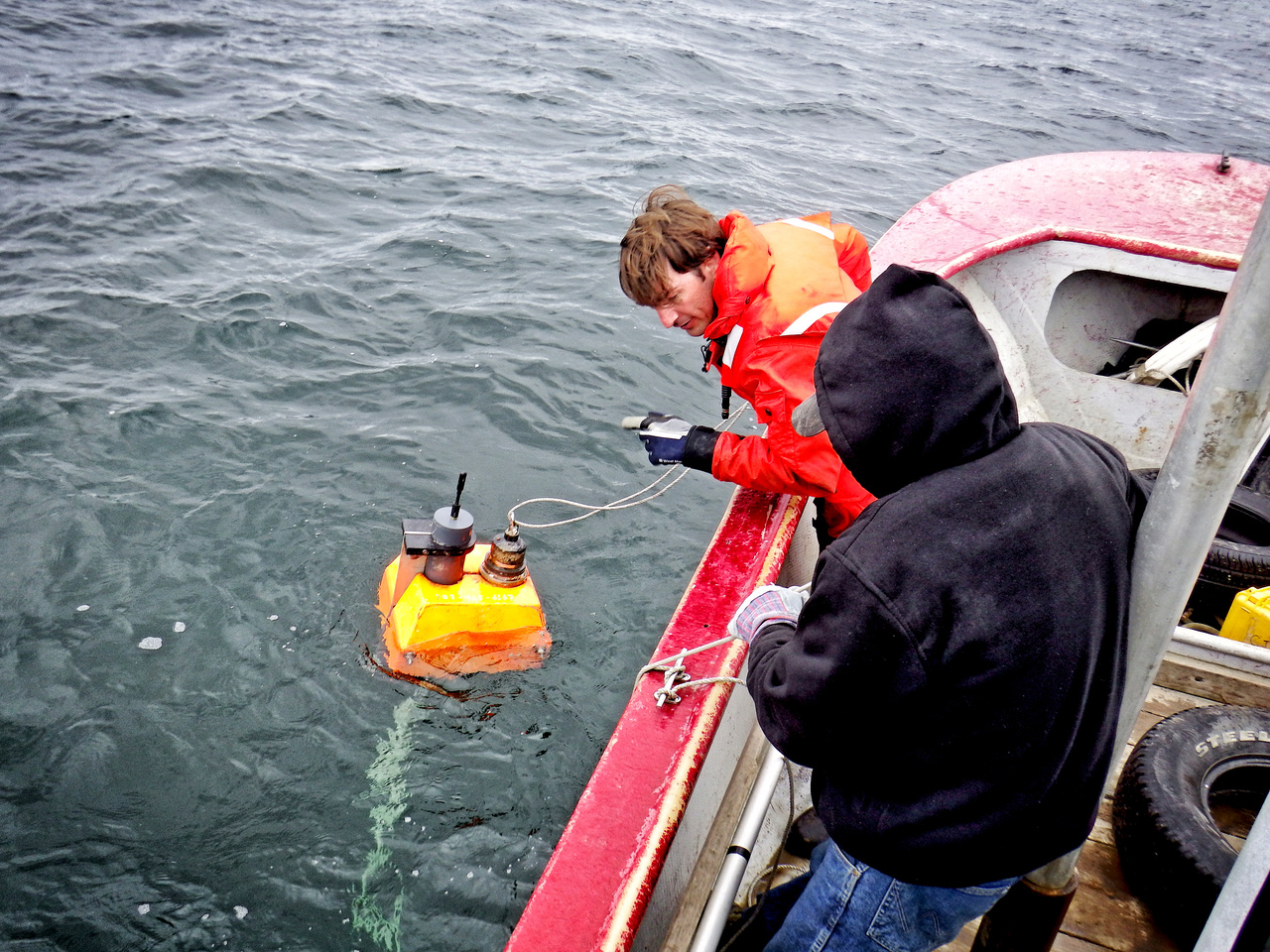 photo of beluga research