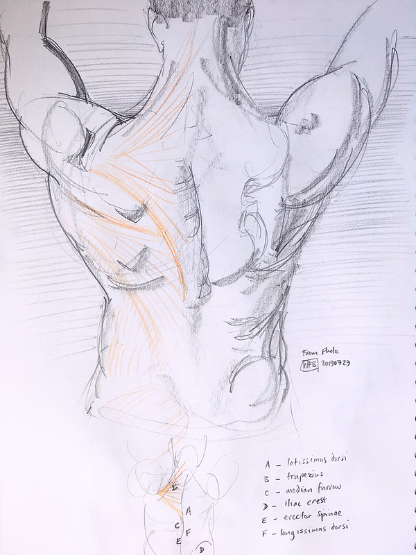 Anatomy for Artists.20190729.06