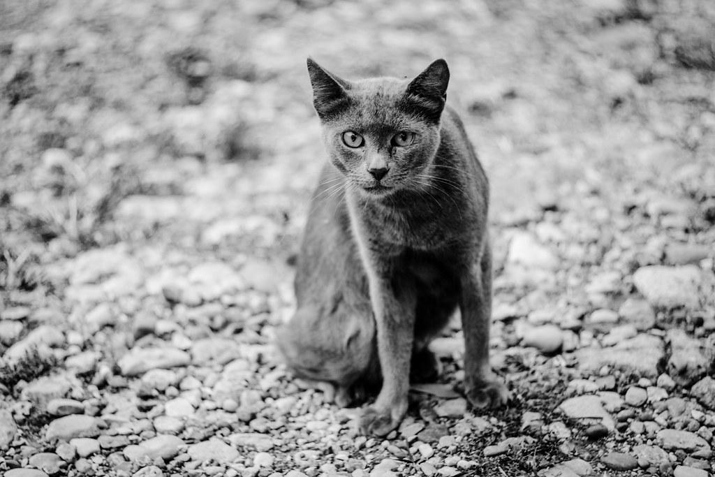 Suspecting cat 📷