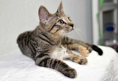 Donatella, gatita parda dulce y guapetona nacida en Abril´19, en adopción. Valencia. ADOPTADA. 48408447391_0c12c65a42