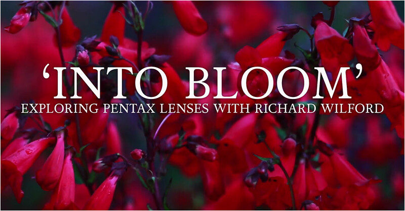 'Into Bloom' – Exploring PENTAX Lenses with Richard Wilford