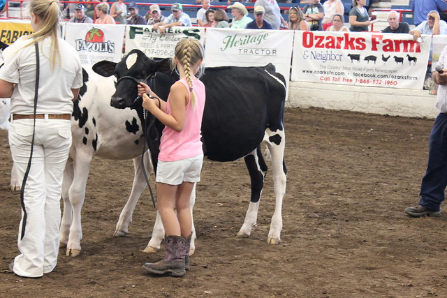 Ozark Empire Fair 2019 - Open Holstein Show