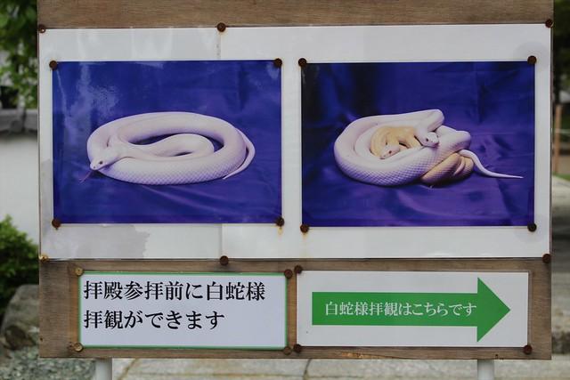 asohakusui-gosyuin001