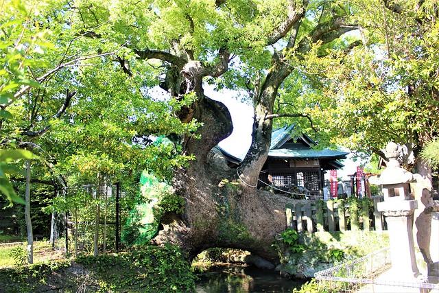 ushijima-gosyuin016