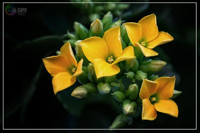 « La patience est une fleur qui ne pousse pas dans tous les jardins  «   : de  John Heywood