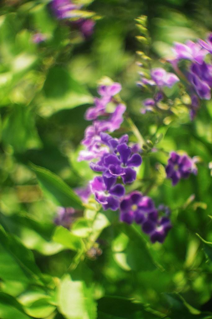 Pentax q10 cine yashinon 13mm