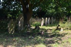 The Panxworth dead