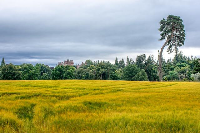 Field. Trees. Castle.