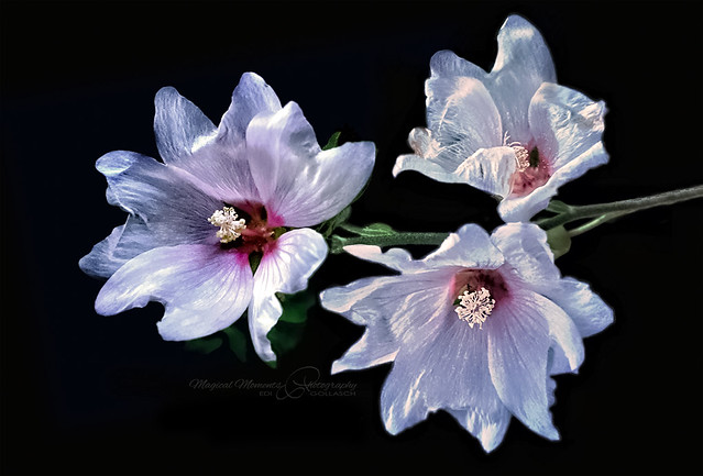Summer bloomers from the Mediterranean Sea