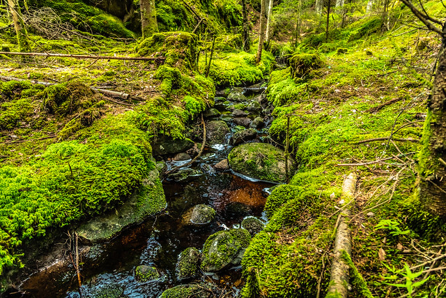 Stream through the green forest