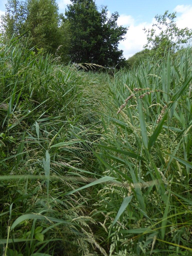 Amblerley Wild Brooks Pulborough Circular walk