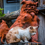 2019 - Japan - Naha - Yachimun Street Cat Walking on Tsuboya district Yachimun Street  we passed this cat perched in front of a Shisa lion.  Cat was keeping an eye on a group of photographers below snapping away in cats direction.