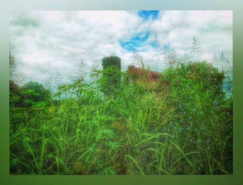 hidden wildflowers field silo oldbarn ozarks missouri