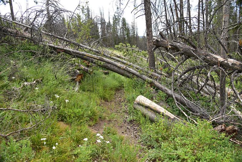 Johnson Peak Trail