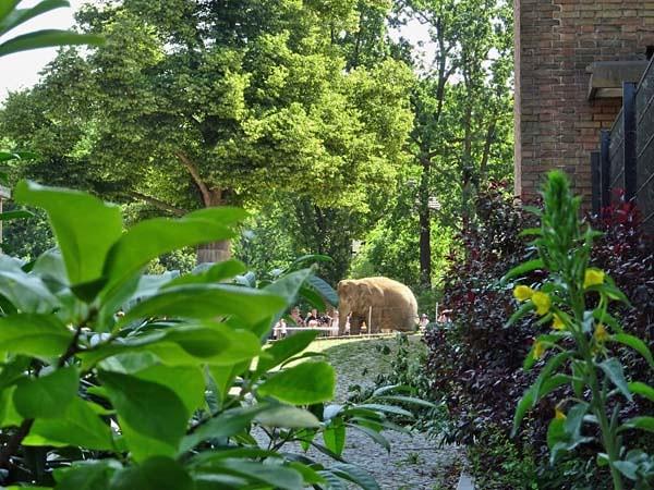 Elefant_Jul19_1_vonAusserhalbZooDurchZaun_Do_11h30_190725