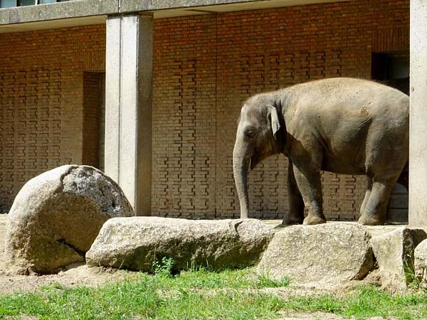 Elefant_Jul19_3a_ANCHALI_amHaus_Do_11h35_190725