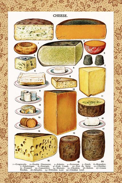 Gezeichnete Käse aus einem englischen Koch- und Backbuch