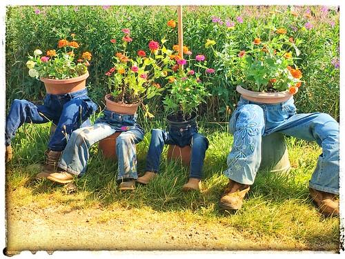 Local scarecrow festival