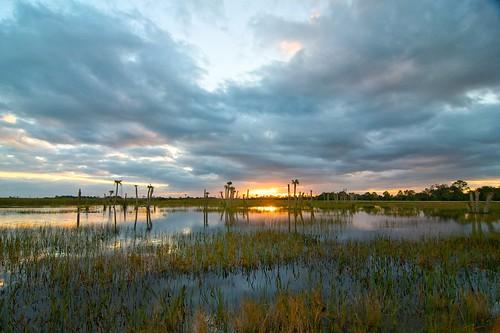 sunrise viera wetlands