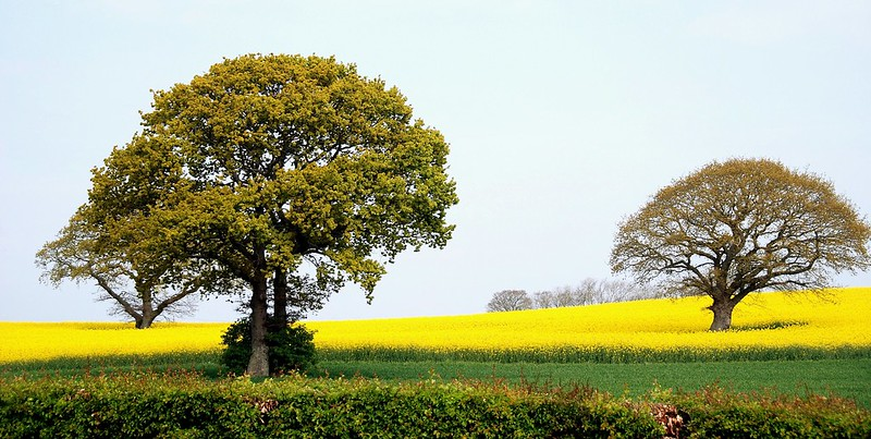 Branching Out into an English Landscape