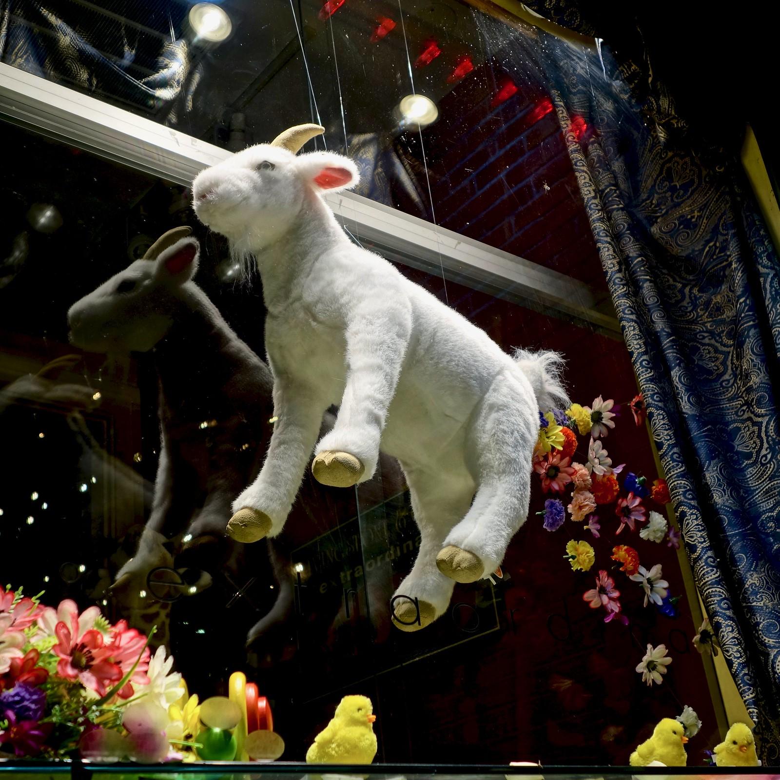Flying goat, Calgary, Alberta, Canada