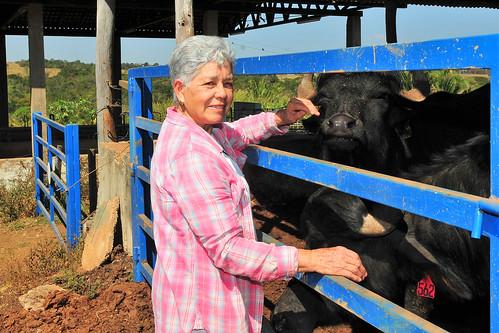 Criação de búfalos no Distrito Federal