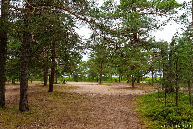 Сосняк, Финский залив, Карельский перешеек