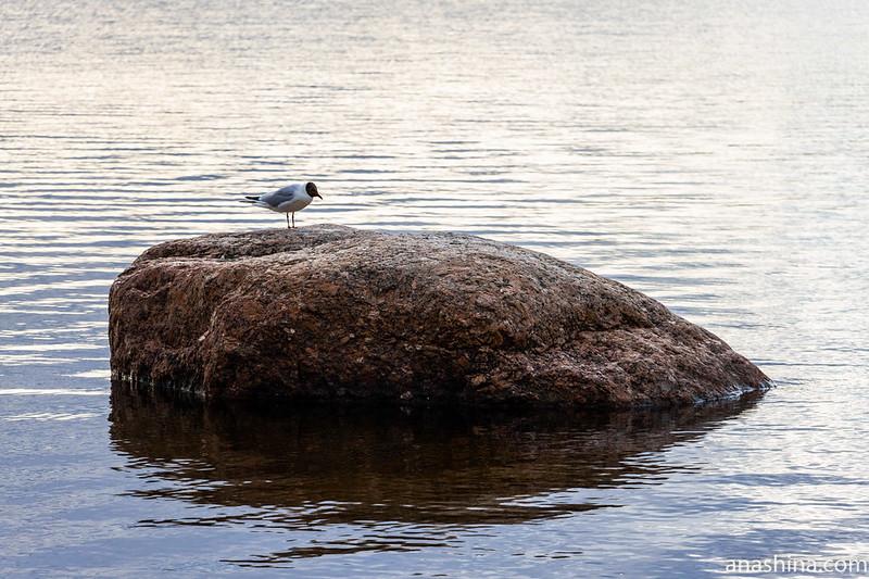 Финский залив, Балтийское море