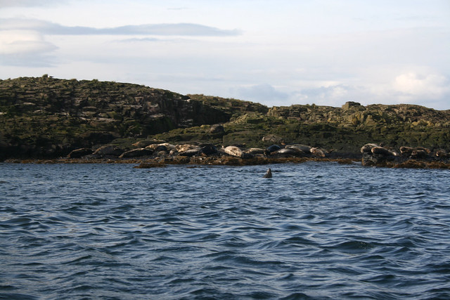 Seals at the Farne IslandsSeals at the Farne Islands