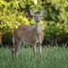 Deer Me :)